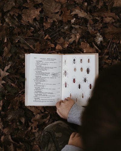 insectenboek